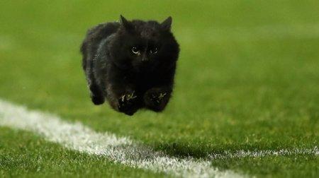Дико крутой кот